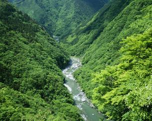 新緑の祖谷渓 V字谷の写真素材 [FYI03994726]