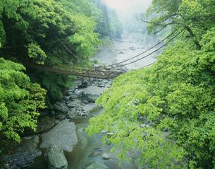 新緑のかずら橋の写真素材 [FYI03994728]