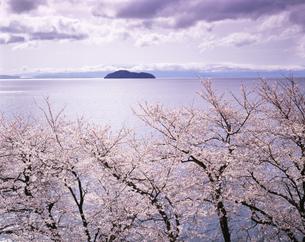 桜と竹生島と琵琶湖の写真素材 [FYI03994820]