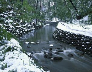 雪の等々力渓谷      2月の写真素材 [FYI03994895]