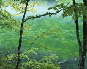 名水・竜ケ窪 津南町 5月 新潟県の写真素材 [FYI03994923]