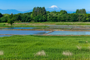 芳原と水田と富士山の写真素材 [FYI03994963]