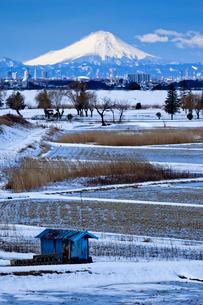 雪化粧の田と葦原と富士山の写真素材 [FYI03994965]