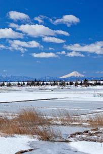 雪化粧の田園と葦原と富士山の写真素材 [FYI03994967]
