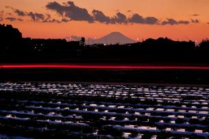 光跡走る見沼田んぼから富士山夕景の写真素材 [FYI03994971]