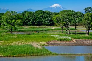 芳原と水田と富士山の写真素材 [FYI03995002]