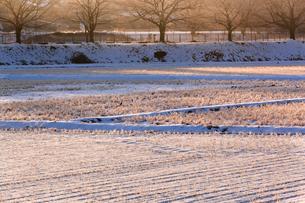 明け行く雪の見沼田んぼの写真素材 [FYI03995006]