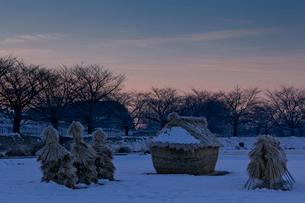 明け行く雪の見沼田んぼのフナノの写真素材 [FYI03995038]