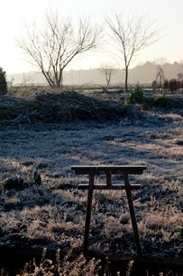 朝霜の草地の小さな鳥居 見沼田んぼの写真素材 [FYI03995106]