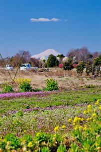 春の色とりどりの花咲く見沼田んぼと軽トラックと富士山の写真素材 [FYI03995295]
