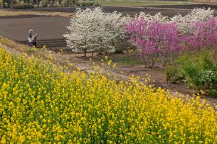 春爛漫の畑の見沼田んぼと農作業の人の写真素材 [FYI03995446]