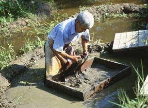 大島紬の泥染めの写真素材 [FYI03995545]