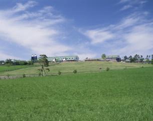 初夏の高千穂牧場の写真素材 [FYI03995627]