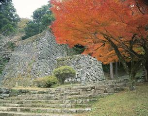 秋の人吉城跡 人吉市  11月の写真素材 [FYI03995933]