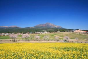 春の高千穂牧場の写真素材 [FYI03995969]