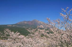 春の高千穂牧場の写真素材 [FYI03995970]