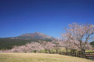 春の高千穂牧場の写真素材 [FYI03995971]