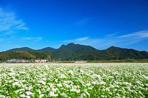 ソバ畑と金峰山の写真素材 [FYI03996029]