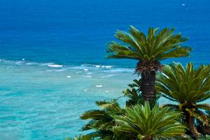ソテツとリーフの海の写真素材 [FYI03996038]
