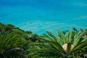 ソテツとリーフの海の写真素材 [FYI03996042]