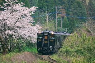 桜と特急はやとの風の写真素材 [FYI03996078]