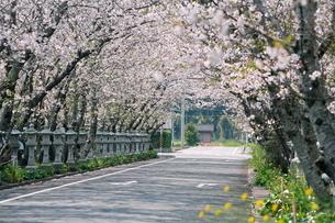 桜の特攻平和公園入り口の写真素材 [FYI03996080]