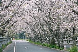 桜の特攻平和公園入り口の写真素材 [FYI03996081]