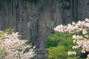 桜と磨崖仏の写真素材 [FYI03996084]