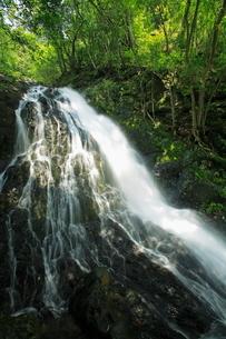 新緑の八瀬尾の滝の写真素材 [FYI03996101]