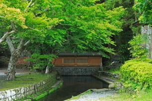 新緑と清水の湧水の写真素材 [FYI03996105]