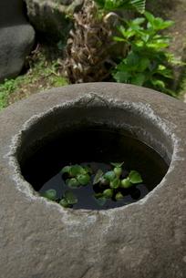 手水鉢の写真素材 [FYI03996114]