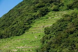 谷ノ山の段々畑の写真素材 [FYI03996131]