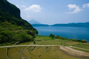 池田湖と新永吉の棚田の写真素材 [FYI03996176]