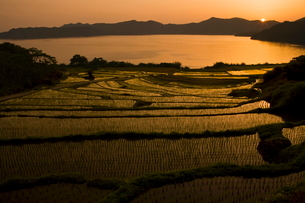 池田湖と新永吉棚田夕景の写真素材 [FYI03996178]