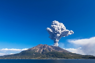 噴煙を上げる桜島の写真素材 [FYI03996271]