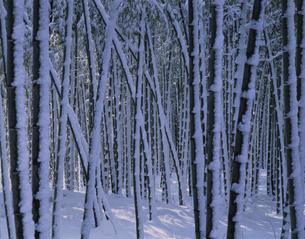 竹林の写真素材 [FYI03997229]
