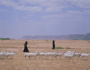 ヤギをつれた羊飼い ハドラマウト谷の写真素材 [FYI04003533]