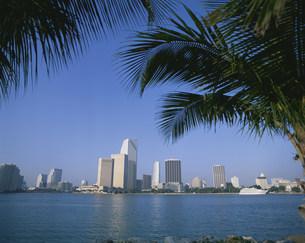 マイアミのダウン・タウンの写真素材 [FYI04004071]