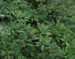 森 11月 ハマケア・コースト ハワイの写真素材 [FYI04005788]