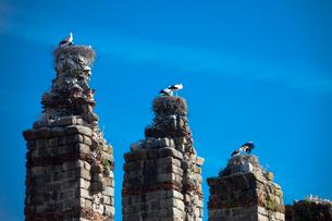Spain-Spring 2011, Extremadura Region, Merrida City (W.H.),の写真素材 [FYI04009298]