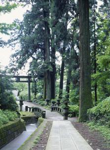 妙義神社境内の杉木立ちの写真素材 [FYI04009323]