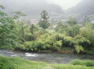 名栗川沿い竹藪と集落の写真素材 [FYI04009418]