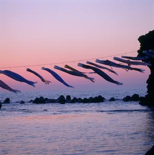 夕風になびく海の鯉幟の写真素材 [FYI04009426]