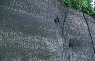 恐竜の足跡の写真素材 [FYI04009470]