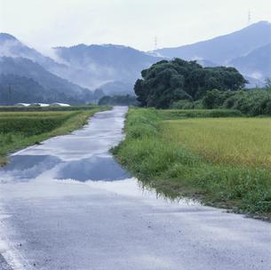 雨上がりの農道の写真素材 [FYI04009507]