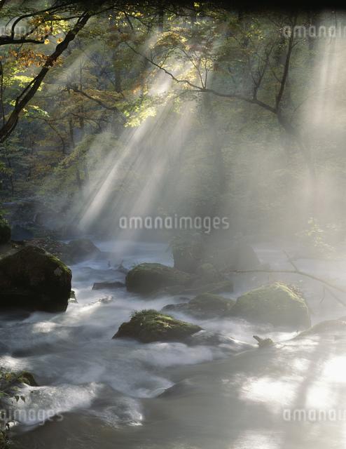 朝霧の奥入瀬渓流の写真素材 [FYI04009589]