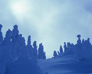 冬の日差と樹氷 八幡平の写真素材 [FYI04009658]