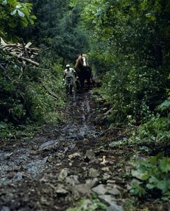 馬と生きる 早池峰山麓の写真素材 [FYI04009660]