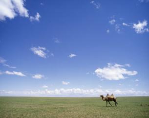 草原を歩くラクダの写真素材 [FYI04010969]