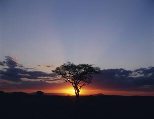 マサイマラ国立動物保護区の朝日と木の写真素材 [FYI04011095]